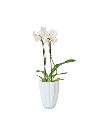 bouquet fleurs Orchidée Blanche casa maroc