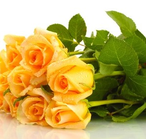 bouquets de Roses jaunes maroc