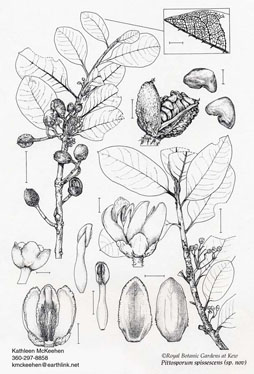 Botanical plate for Kew