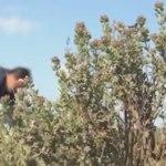 vidéo garrigues du Pic Saint Loup
