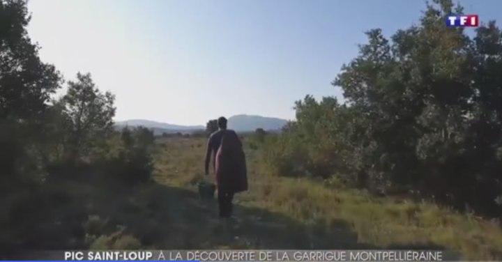 vidéo TF1 garrigues de montpellier