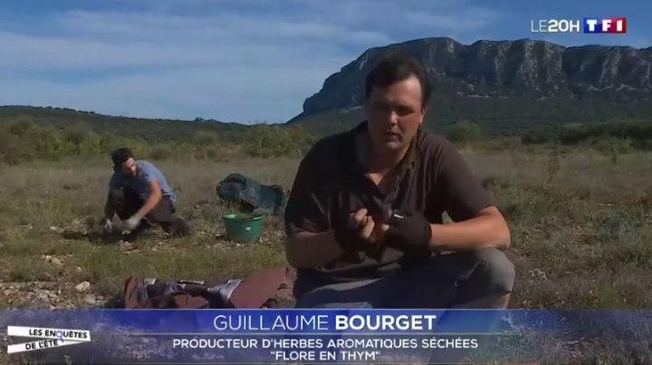 reportage herbes aromatiques TF1