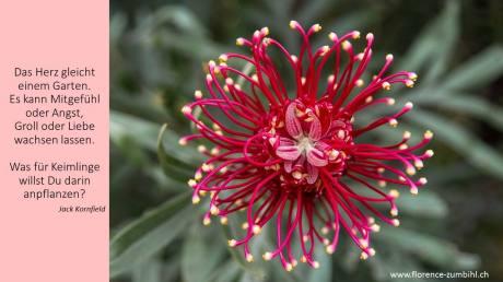 Zumbihl-Florence-Das Herz gleicht einem Garten