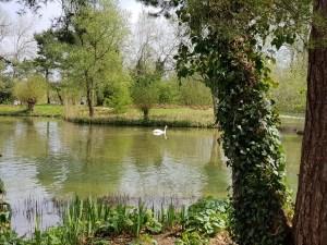 Heuschnupfen - Behandlungsmöglichkeiten - zumbihl florence park im gruenen april 2018