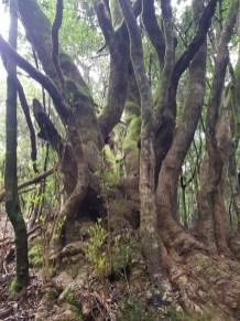 Nationalpark Garajonay auf La Gomera Seminarreise mit Florence Zumbihl