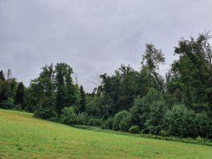 Wald und Natur mit Florence Zumbihl
