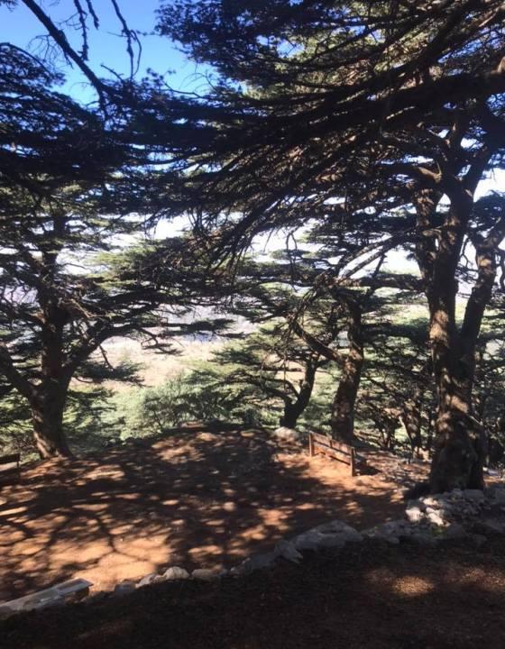 Mon voyage au Liban