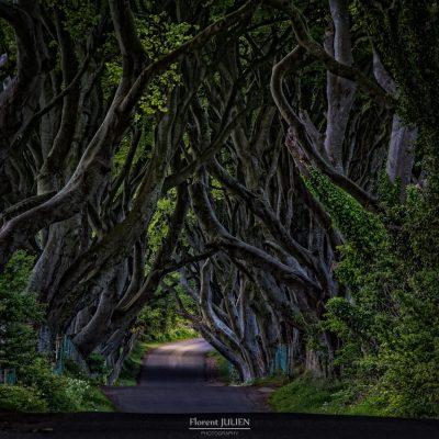 The Dark hedges
