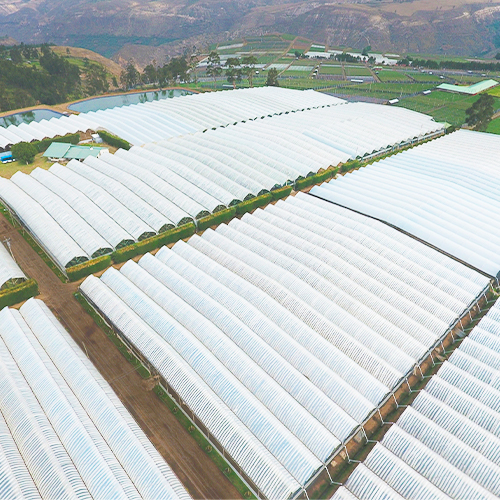 Ecuadorian Flower Producers - Florequisa