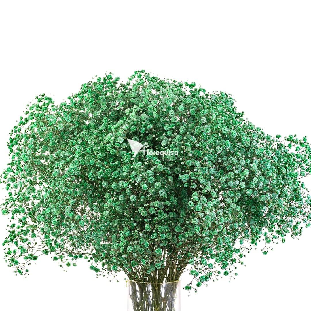 Green Gypsophila by Florequisa Flower Growers