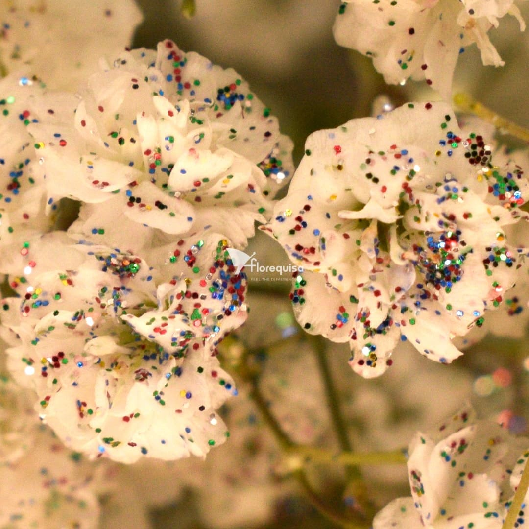 Gypsophila Glittered Mixed by Florequisa Flower Growers