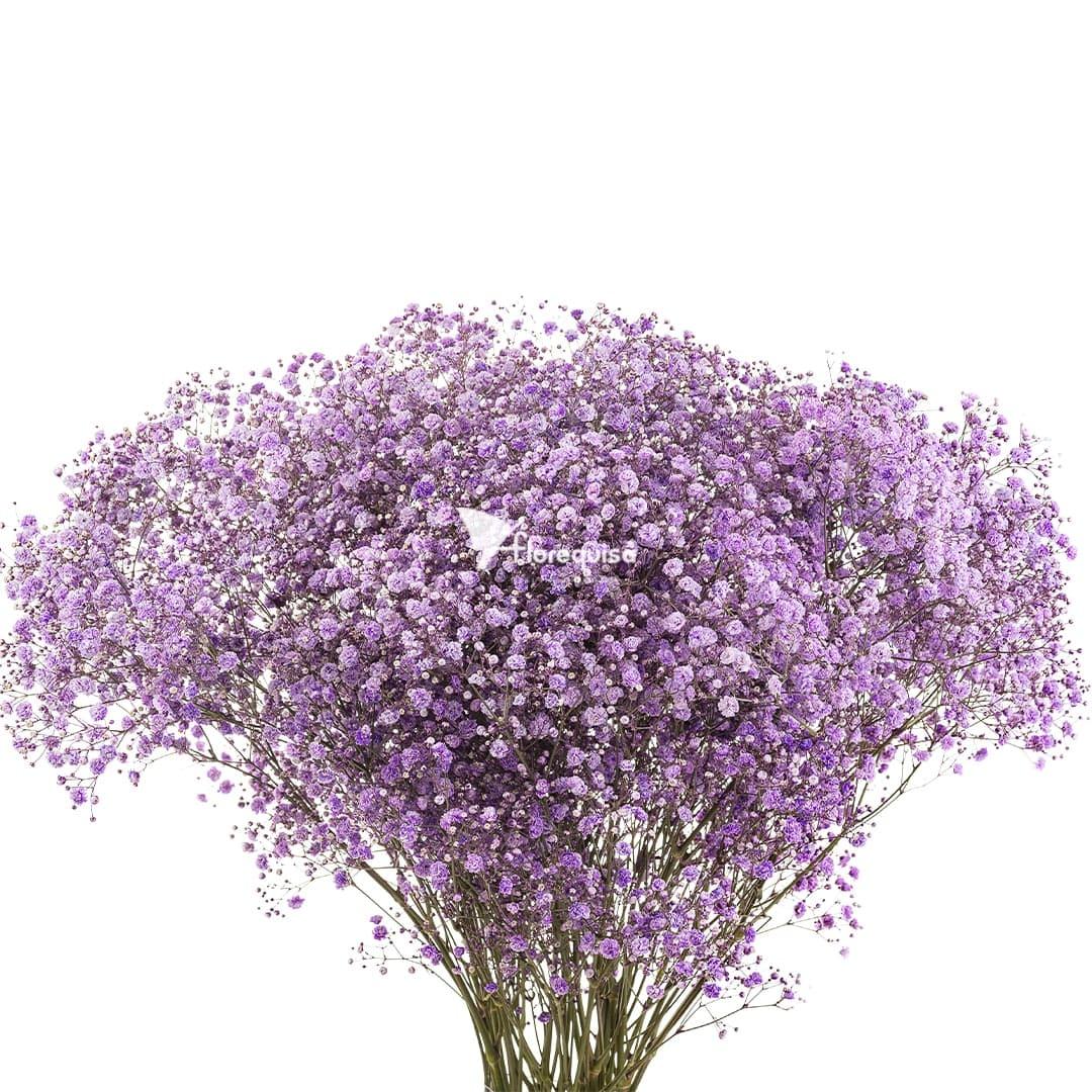 Light Purple Gypsophila by Florequisa