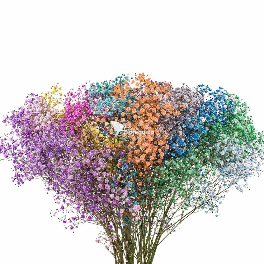 Mixed Colors Gypsophila by Florequisa