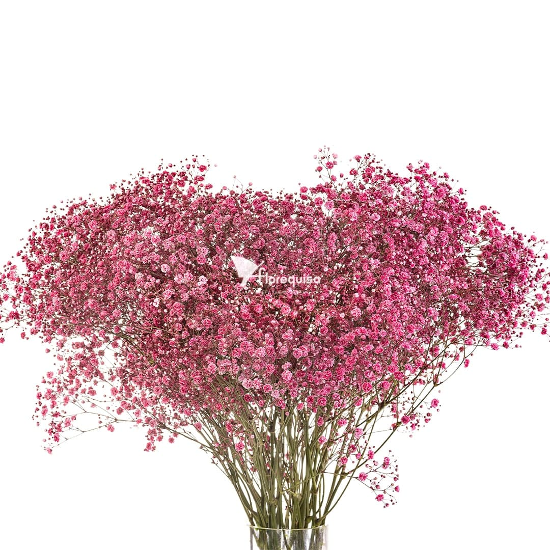 Red Gypsophila by Florequisa Flower Growers