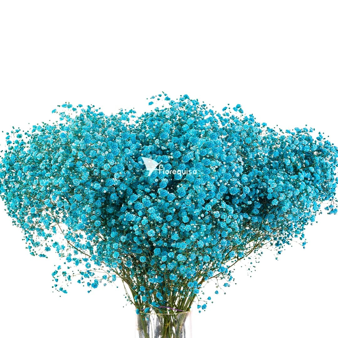 Turquoise Gypsophila by Florequisa Flower Growers