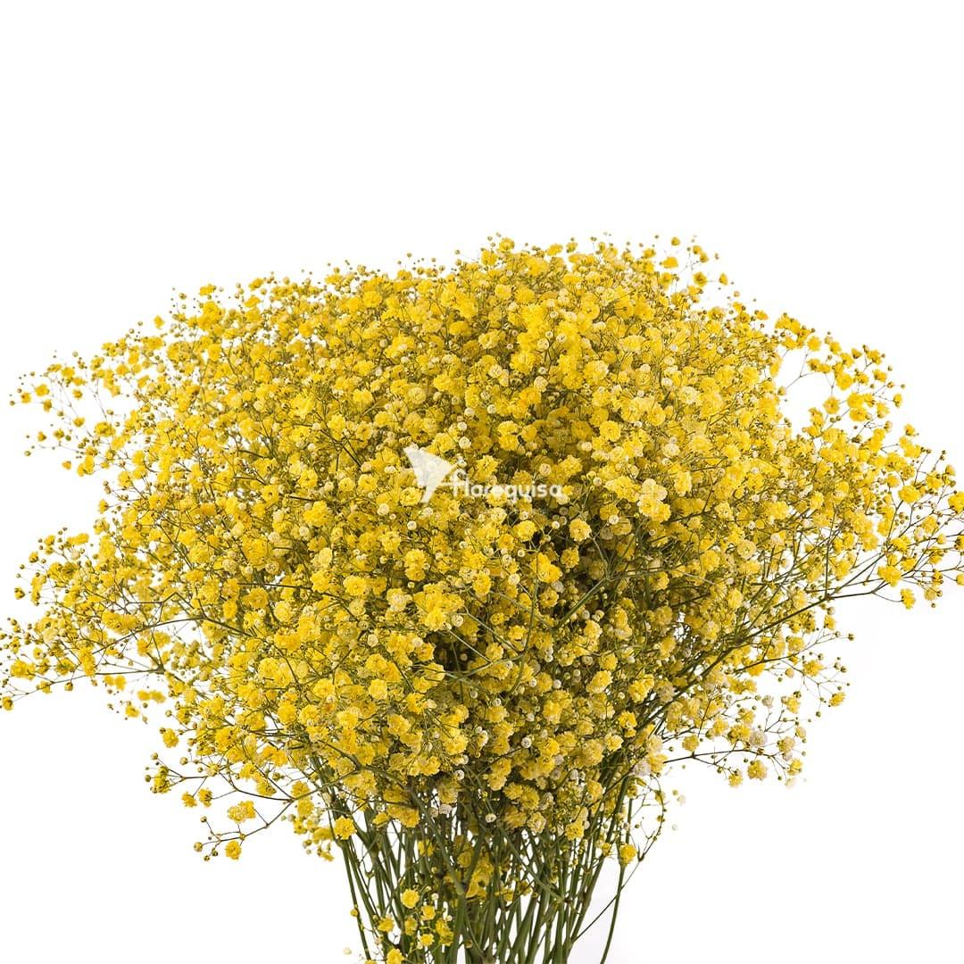 Yellow Gypsophila by Florequisa Flower Growers