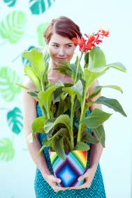 PLANTAS-A-bbh_canna_more_is_more_001_hr_0