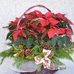 Canasta de 3 plantas de Nochebuena - NAV1