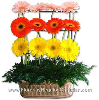 Jardinera primaveral con Gerberas - P11