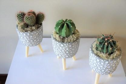 cactus con maceta