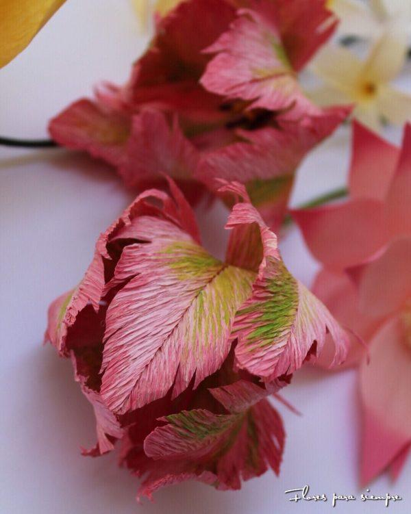 tulipan parrot rosa