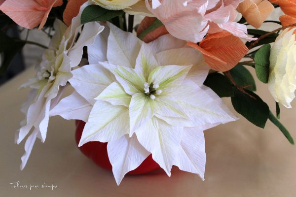vista flor de pascua blanca