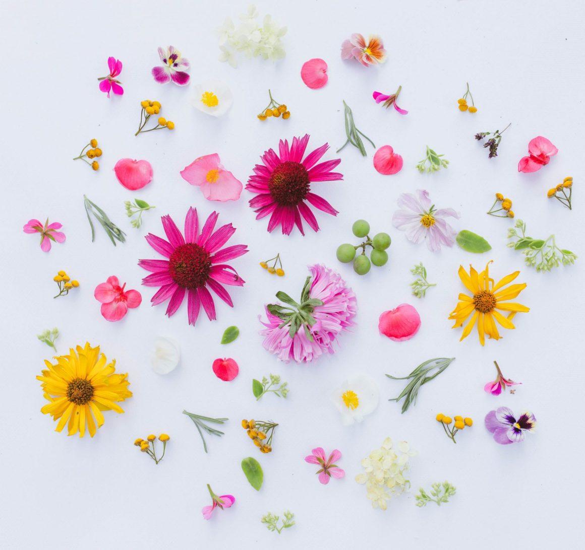guia-significado-y-simbolismo-de-las-flores-flores-para-siempre