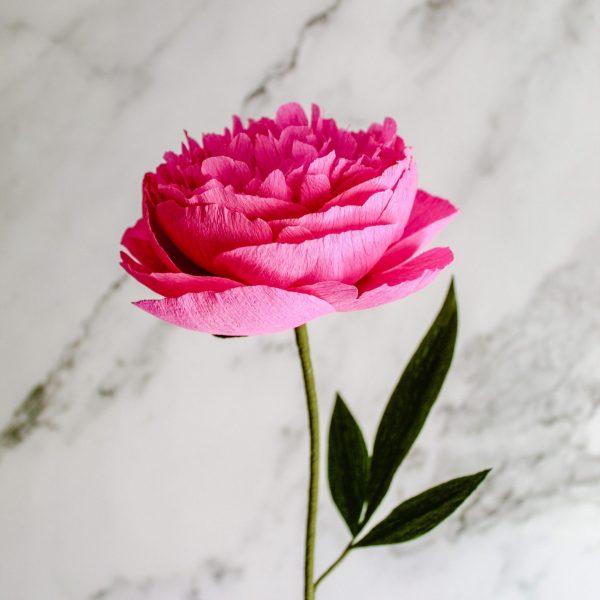 peonía de papel realista color fucsia, flores para siempre