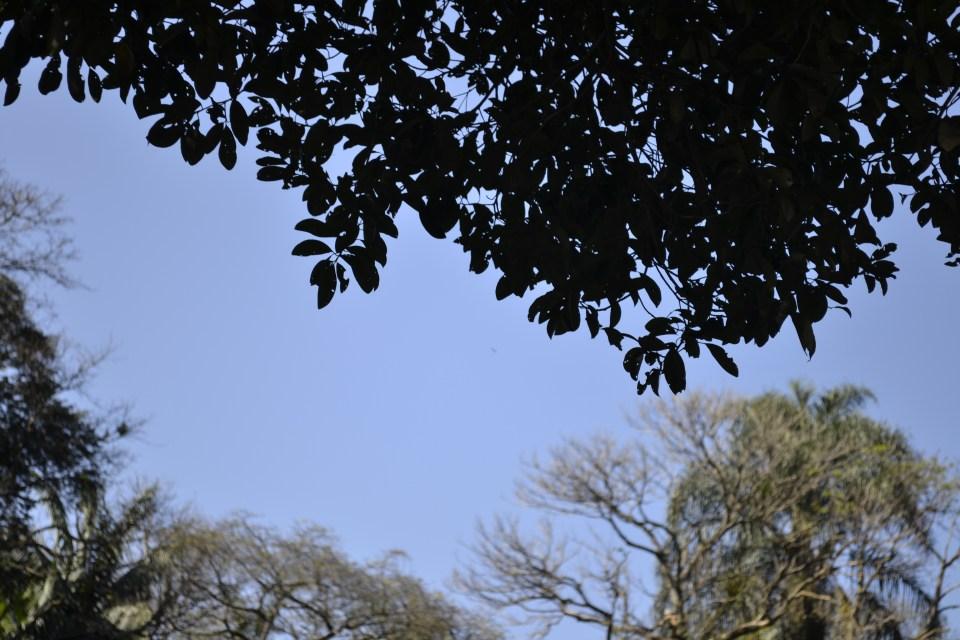 florestalis-header
