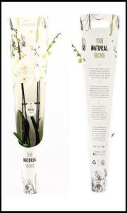 Phalaenopsis blanca box regalo P.V.P: 25€