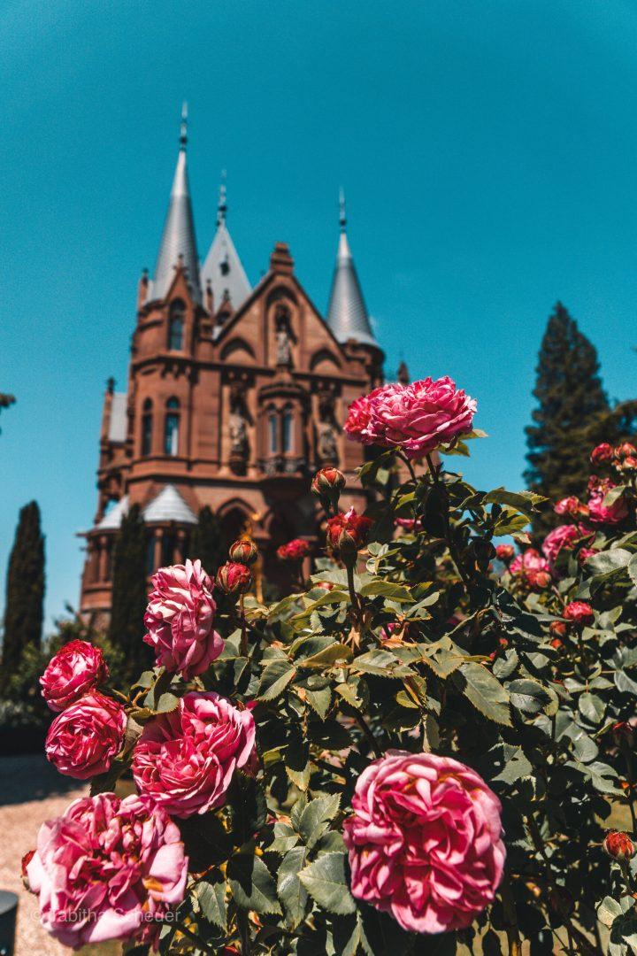 schloss-drachenburg-guide-13-florianventures