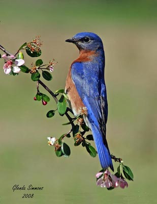 """""""All About Bluebirds""""          Meeting – Penney Farms"""