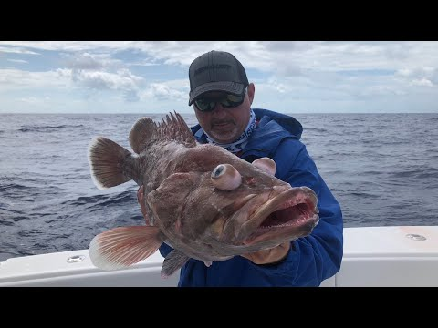 Circle Hook Overview & Tips - Florida Sport Fishing TV - LIVE Seminar w/Real Time Fishing Report