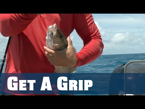 How To Safely Grab Mangrove Snapper Without Getting Cut/Poked - Florida Sport Fishing TV - Pros Tip
