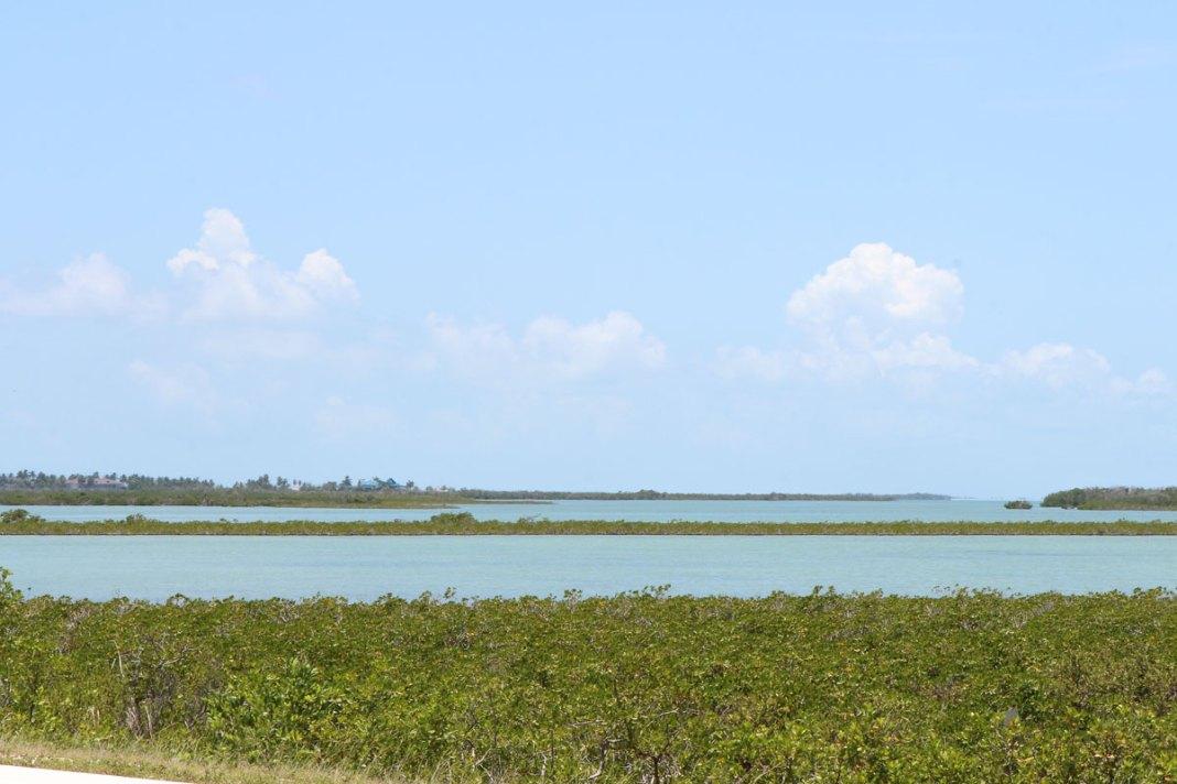 4 new Dengue fever cases in Florida Keys