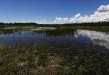 Federal government grants Florida authority over wetland development