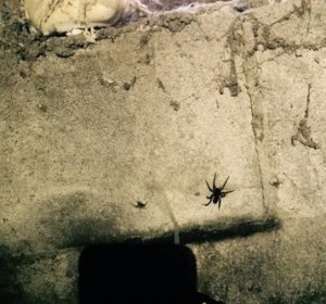 keep crawl space pests out