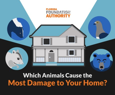 Which Animals Cause the Most Damage to Your Home and Foundation?