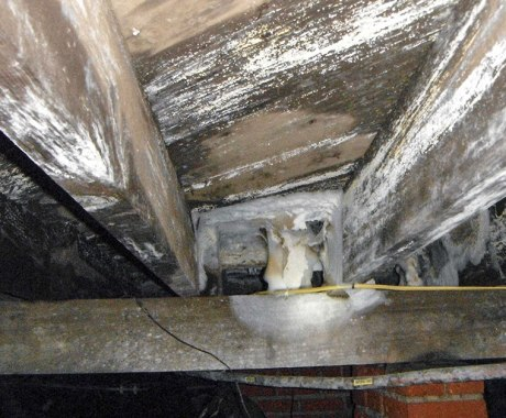 How to Know If You've Got Wood Rot or Mold in Your Crawl Space