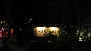 Harambe African Village at Night in Disney's Animal Kingdom Park