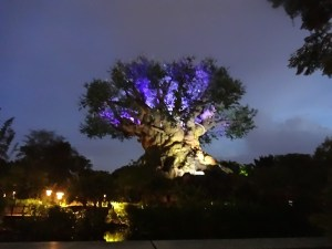 Dusk at Animal Kingdom - Tree of Life is Beginning to Come Alive!