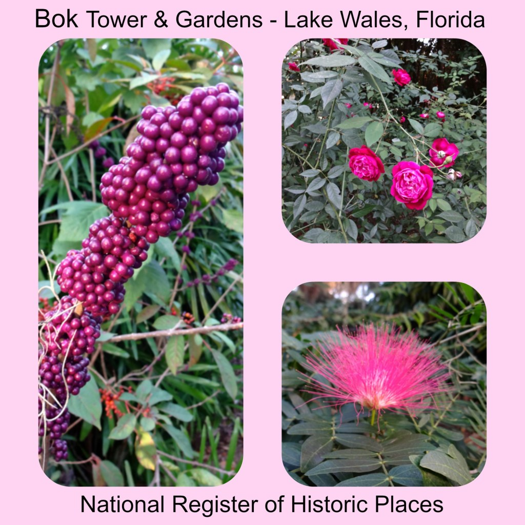 Beautiful Winter Blooms at Bok Tower Gardens in Lake Wales Florida