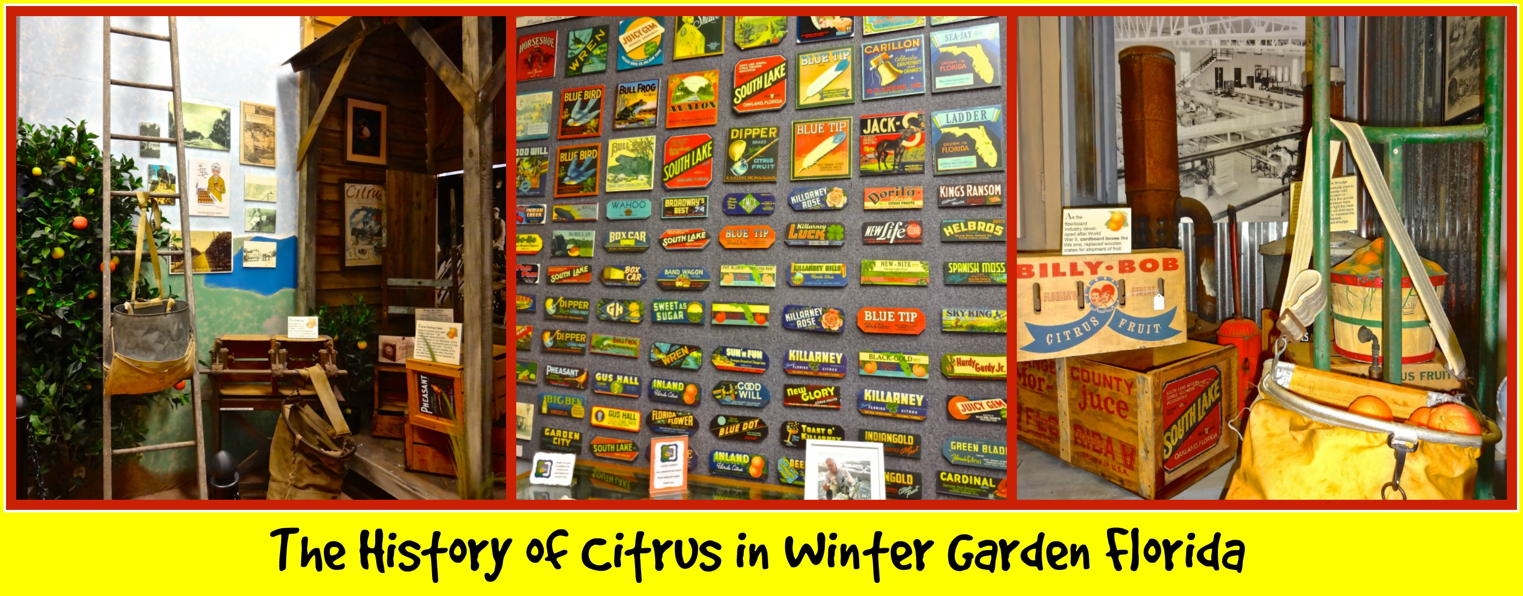 The History Of Citrus In Winter Garden Florida
