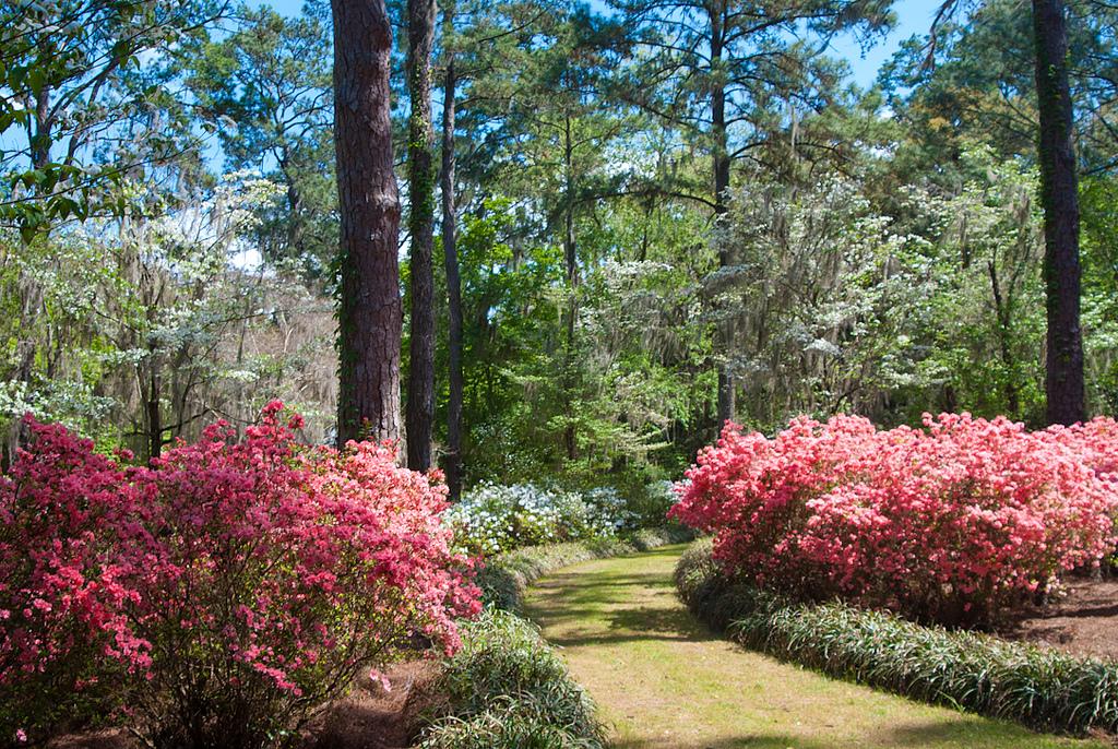 Landscape Design Fees