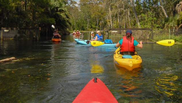 Photo Gallery: Silver Springs by Kayak