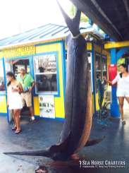Monster Swordfish Catch