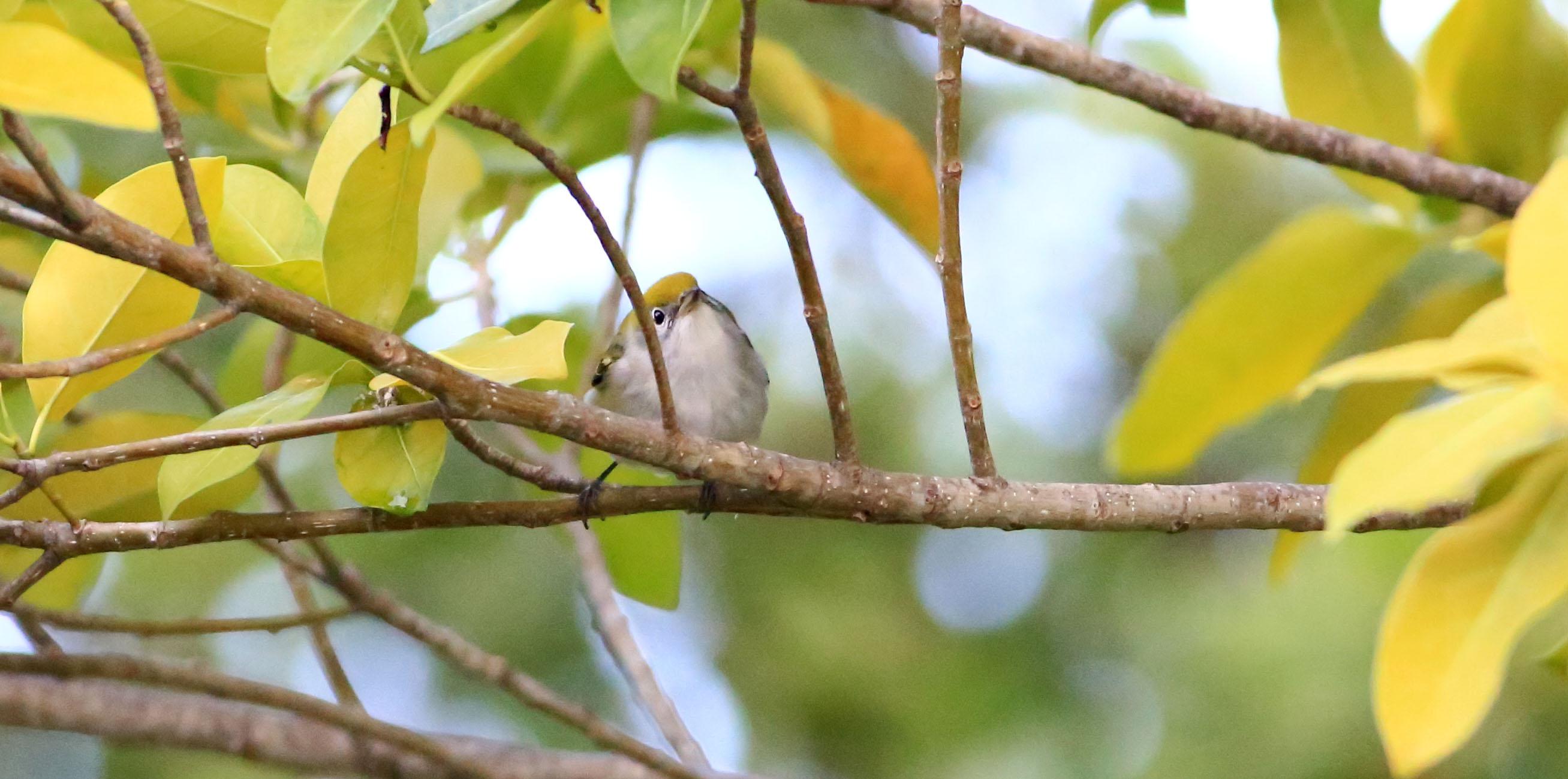 Florida Keys Hawkwatch
