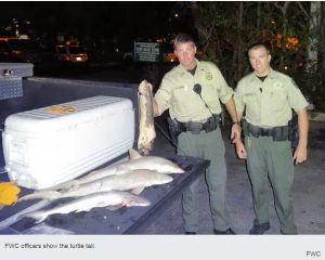 FWC Officers Show the Loggerhead Turtle Tail