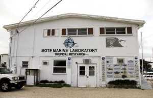 Mote Marine Lab Summerland Key