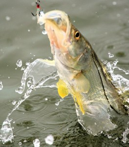 Snook On!